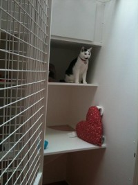 Cat sitting inside the cattery cage