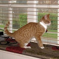 Perry in the cattery